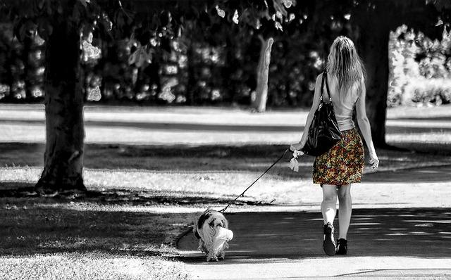 dog-walk-make-money
